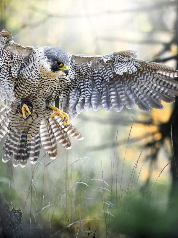 Rutas ornitológicas
